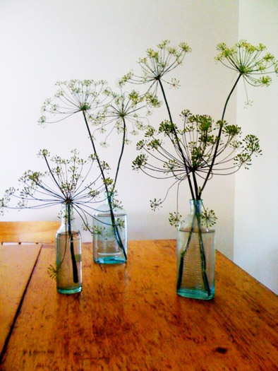 dill-weed-flowers