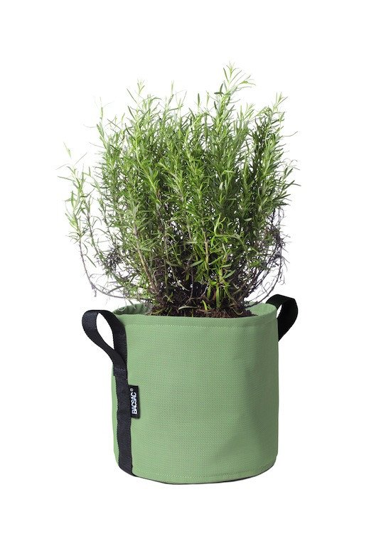 pot_10l_olive_bp010lo_plante_1024x1024