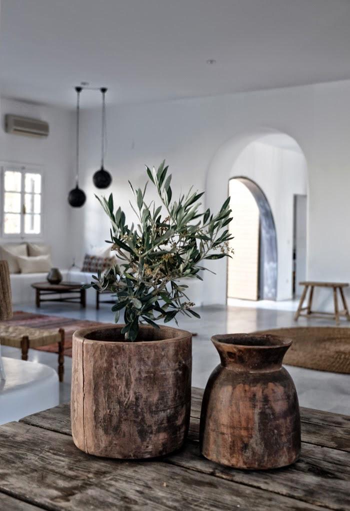 olivetree13
