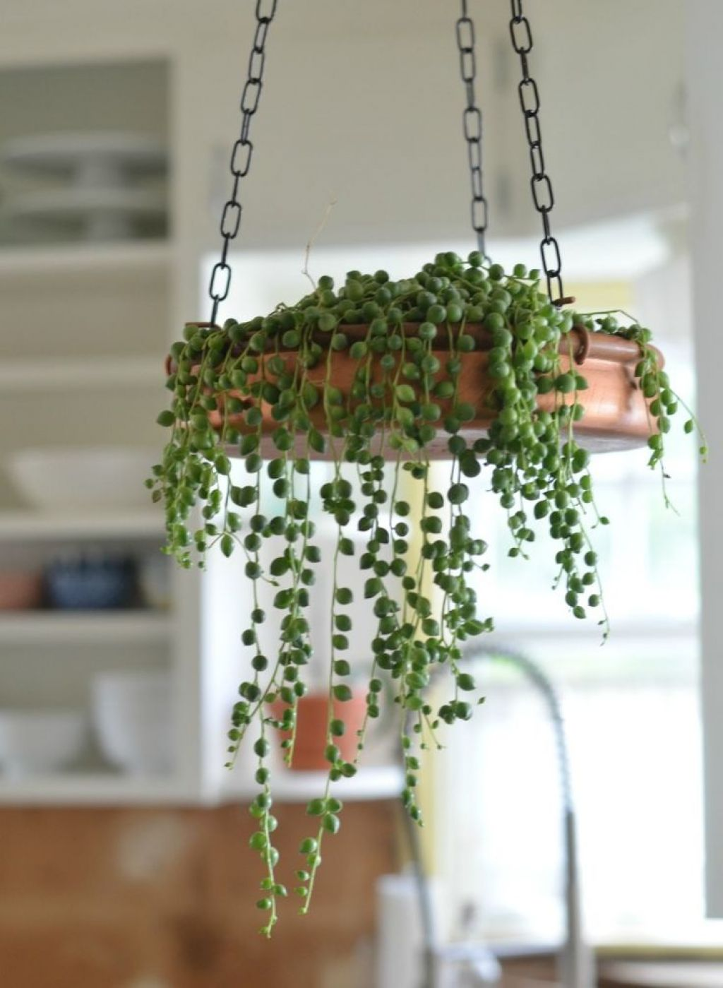 kitchen-with-string-of-pearls-indoor-plant
