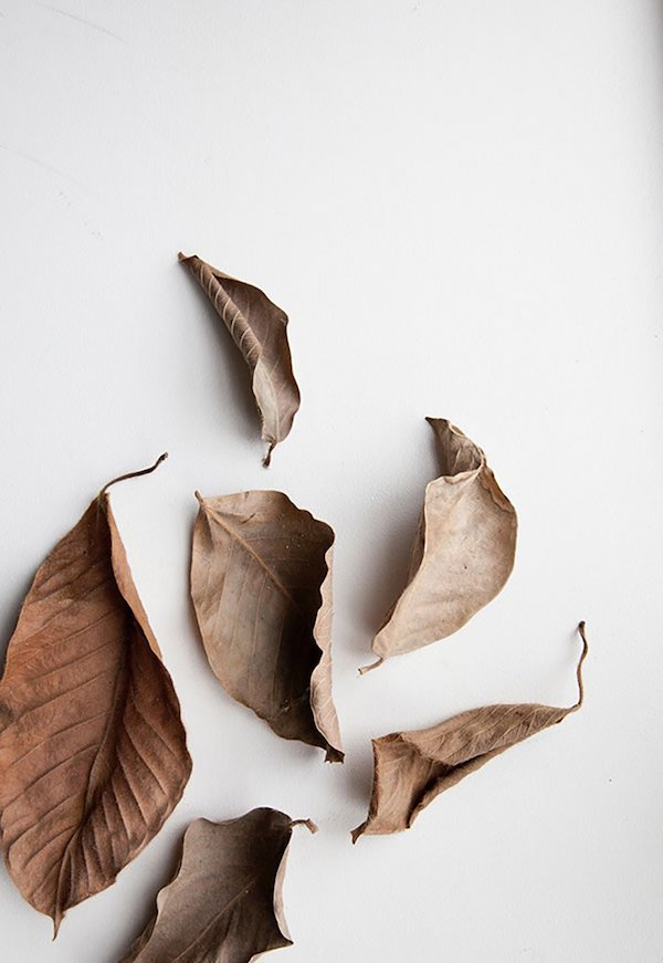 tfs_autumn_norm_architects_leaves-1